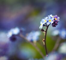 """""""Just living is not enough. One must have sunshine, freedom, and a little flower."""" by Paul-M-W"""