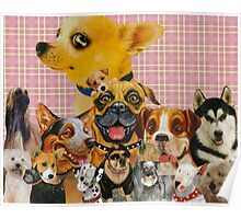Dogs are Fun Poster