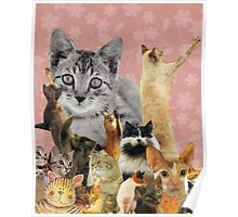 Feline Follies Poster