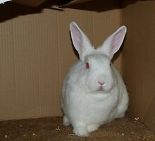 Bart in his box - aka Demon Bunny by KMorral