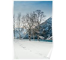 Trees By The Winter Lake Poster