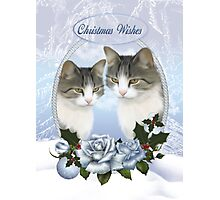 Two Christmas Cat's With Snow Ice And Blue Roses With Holly  Photographic Print