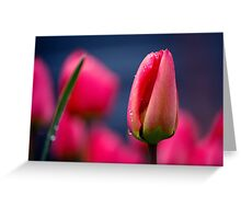 Tulip(s) Greeting Card