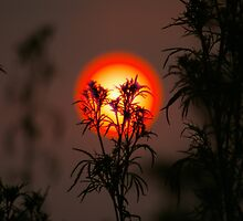 The Man in The Sun by Graeme M