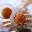 Cape Gooseberry Lace by LouJay