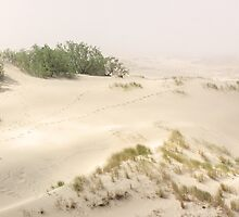 Sand dune. Mist by novikovaicon