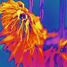 Gebera in flouros by Lozzar Flowers & Art