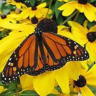 Butterfly Heaven by Monnie Ryan