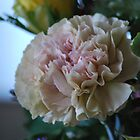 Soft Carnation by Lozzar Flowers & Art