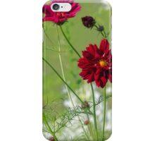 Red Cosmos - Summer Garden iPhone Case/Skin