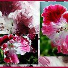 Pelargonium Collage in Pink by Lozzar Flowers & Art