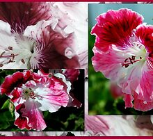 Pelargonium Collage in Pink by Lozzar Flowers & Art