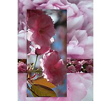 Spring Blossom Collage Photographic Print