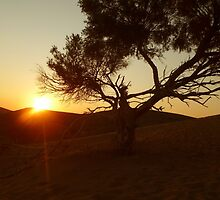 Sand Dune Sunset by Vicki Spindler (VHS Photography)