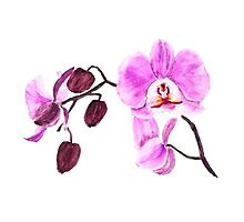pink orchid watercolor painting Photographic Print