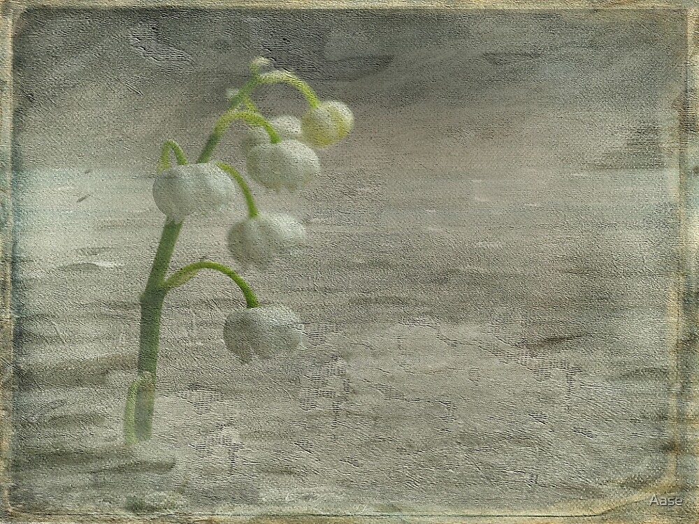 Lilly of the Valley by Aase