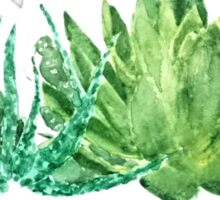 green succulent arrangement watercolor  Sticker
