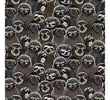 Social Sloths Photographic Print