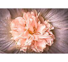Pink Thrills Photographic Print