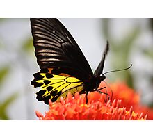 Colorful beauty Photographic Print
