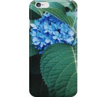 Blue Flowers photograph iPhone Case/Skin