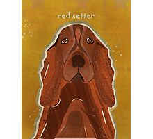the red setter Photographic Print