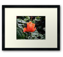 Rose Fellowship bud Framed Print