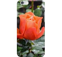 Rose Fellowship bud iPhone Case/Skin
