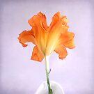 Orange Daylily on a Light Purple Background by LouiseK
