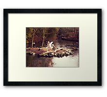 A pelican in Lille zoo Framed Print