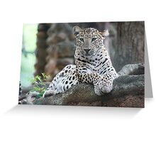 Light Leopard Greeting Card