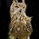 Owl Portrait by John Thurgood