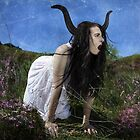 Bull in the Heather by Analisa Ravella