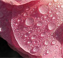 Strawberry Ice by Susie Peek