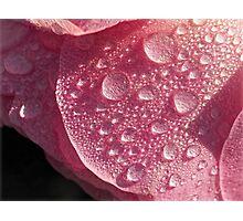 Strawberry Ice Photographic Print