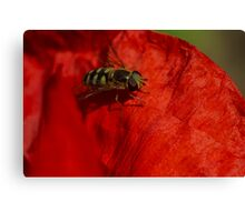 hoverfly on red poppy petal Canvas Print