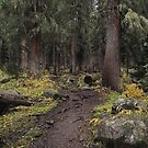 The High Forest by Eric Glaser