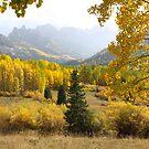 Leaf Days by Eric Glaser