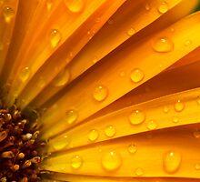 zomers kleuren in zomerse regen by stresskiller