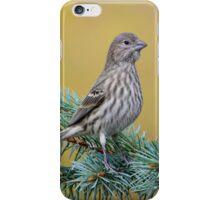 Female House Finch iPhone Case/Skin