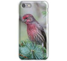 Male House Finch iPhone Case/Skin