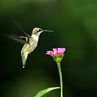 One Hummingbird by Christina Rollo