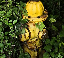 Abandoned Hydrant by Jeffrey J. Miller
