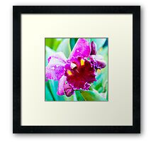 Close up shot on colorful Cattleya Orchids Framed Print