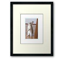 Giving Thumper a run for his money Framed Print