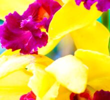 Close up shot on colorful Cattleya Orchids Sticker