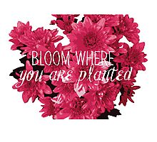 Bloom where you are planted Inspirational Quote Photographic Print