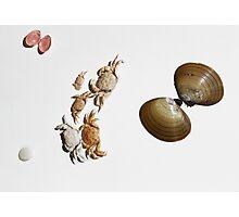 Shells Photographic Print