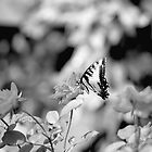 Butterflies Are Free by Theresa Campbell