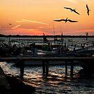 Sunset at Rio Lagartos by Yukondick